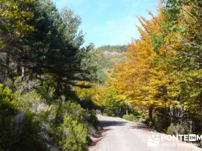 Rutas montaña Guadalajara, Parque Natural del Hayedo de Tejera Negra; mochilas para senderismo